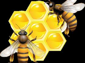 Пчелотуй – 2017